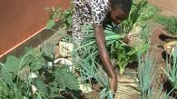 Utiliser des buttes en sacs pour cultiver des légumes
