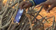 Quality cassava planting material