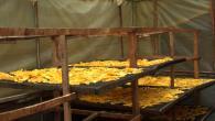 Faire des chips de mangue