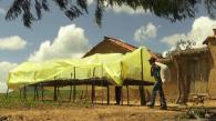 Gestion des aflatoxines dans les arachides