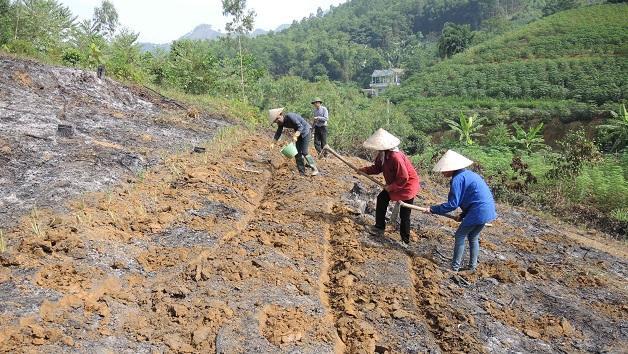 Cultiver le manioc sur des terres inclinées
