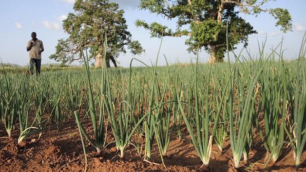 Installing an onion field