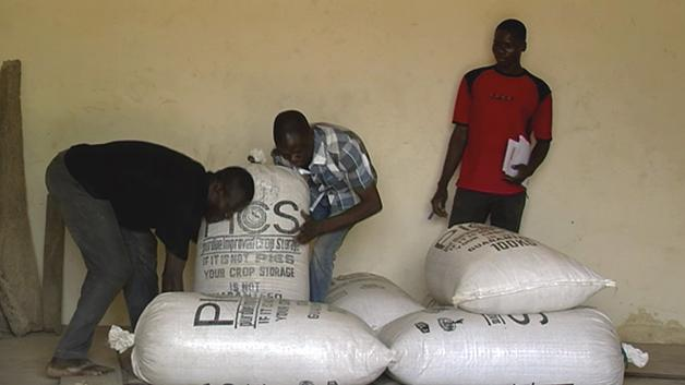 Storing and managing maize in a warehouse