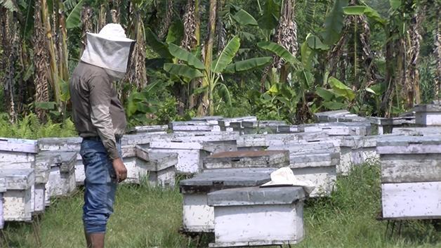 Making a modern beehive
