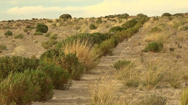 Living windbreaks to protect the soil