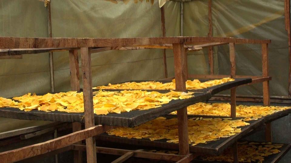 Making mango crisps