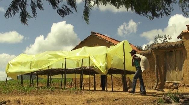 Gestion des aflatoxines dans les arachides pendant le séchage et le stockage