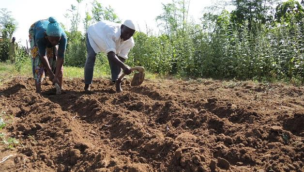 How to make a fertile soil for onions